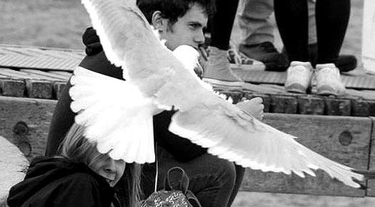 Fines for Feeding Seagulls