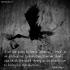 Stork Theory