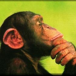 chimp3's picture