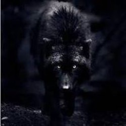 ShadowKnightNZ's picture